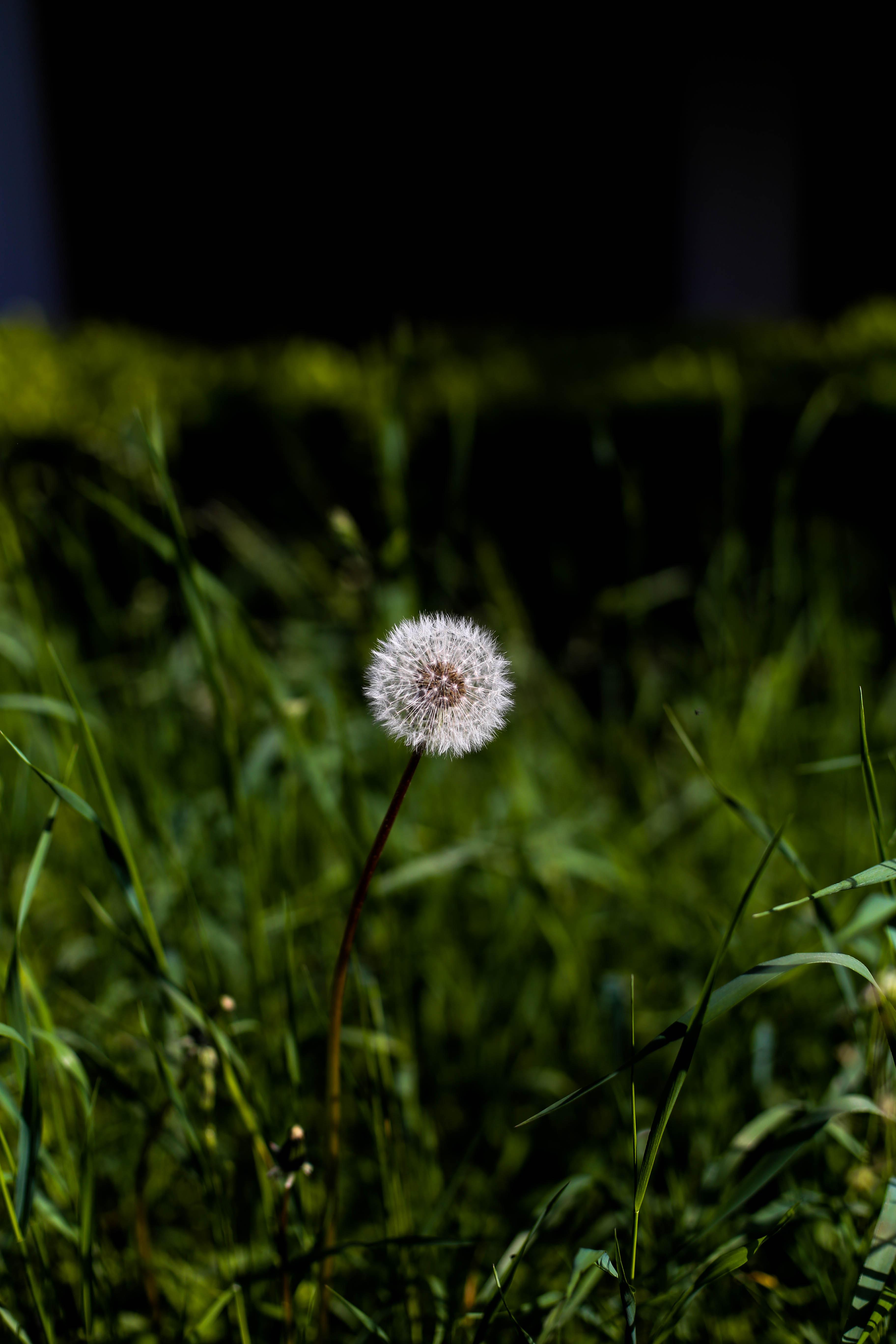 primavera-15